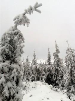 Totul e alb