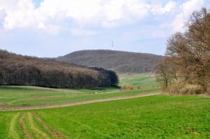 Pădurea de lângă Târgu-Mureş