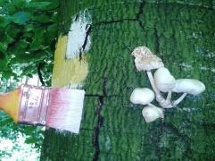 ...toate ciupercile sunt comestibile... unele de mai multe ori, după unele amețeşti, iar ultima categorie sunt cele care le mănânci o singură dată