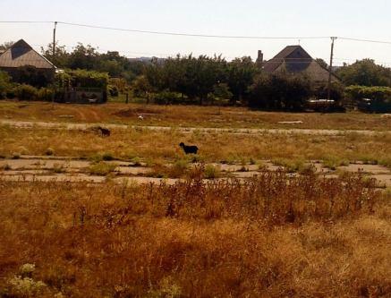 Peisajul dezolant, care te întâmpină, la intrarea în Tighina