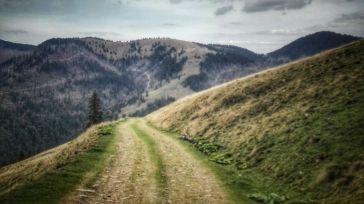 Nu ai fi zis că un asemenea drum, până la urmă banal, ca orice drum forestier, poate ascunde în el atâta suferință. Vremurile de război sunt reprobabile, iar amintirea lor, întotdeauna provoacă fior