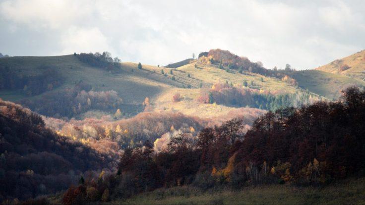 Munți joși, depășind aproape insular 1300 m, munții Trascăului sunt caracterizați prin culmi domoale, acoperite aproape tot timpul de fag și păduri în amestec, cu brad sau molid prezent aproape sporadic și doar acolo unde expoziția este opusă soarelui sau altitudinea depășește 1000 m